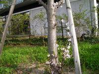 SANY0061.JPG